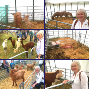 Cotswold Show Blog
